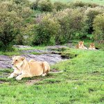 Foto de Mara Explorer Camp