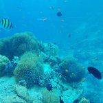 Foto de 5.8 Undersea Restaurant