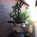 Cactus Pots !!