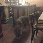 Kopek hoovering the floor