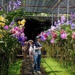 Photo of Sai Nam Phung Orchid Farm