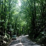 The road through Mahogany Forest