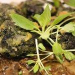 ALBONDIGAS DE ESPINACA Y RICOTA CON CREMA DE HONGOS (Spinach and ricotta cheese ball with mushro