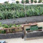 Museo del Platano - views from the balcony