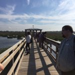 Checking out all of the birds on our tour today. We saw so many ducks today and two alligators!
