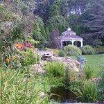 Garden with Koi pond