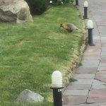 Fauna en los jardines