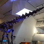Royal Ontario Museum (ROM) Foto