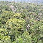 Photo of Manaus Botanical Garden - MUSA