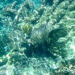 Coral at Hol Chan