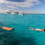 Snorkelling the Lagoon of Lady Musgrave Island