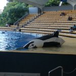 Photo of Loro Parque