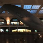 Photo de American Museum of Natural History
