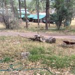 Wheelbarrow and other debis strewn about the property.