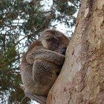 Billede af Kangaroo Island Odysseys