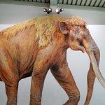 Foto de Waco Mammoth National Monument