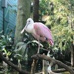 Photo of The Florida Aquarium