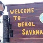 Savana Bekol