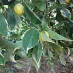 Botanical Park & Gardens of Crete Restaurant Photo