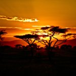 Could You Survive A Kenyan Safari? Take This Quiz And Find Out! |