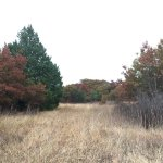 LBJ National Grasslands