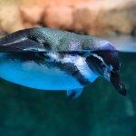 Dubai Aquarium & Underwater Zoo Foto
