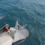 Capt. Dave's friendly dolphin escort