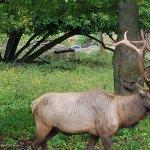 Gaylord's City Elk Park