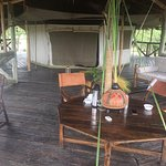 Cheetah Tended Camp  The best experience in Africa