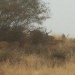 Ranthambore National Park Foto