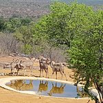 Photo of Fifty Seven Waterberg