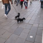 Cute dogs with the locals in Santa Croce