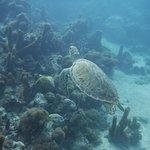 Sea Turtle - Bight Reef