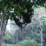 Фотография Королевский Ботанический Сад