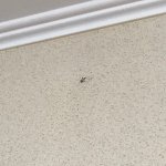 Long dead mosquito dried up on the wall. View of a concrete wall and run down area, grayish old