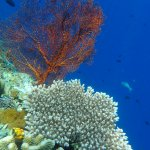 Photo de Bunaken National Marine Park
