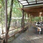 Foto van Sun Moon Lake Bamboo Rock Garden