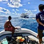 Photo of Fish 'n Fins Palau