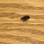 Bug on nightstand