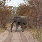 Wilderness Safaris Little Makalolo Camp Photo