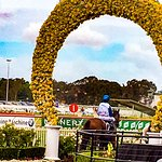 November Handicap day Rosehill Gardens Racecourse