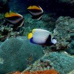 Foto de Aqua Vision Scuba Diving
