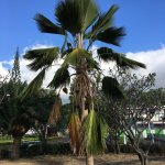 Foto di Paofai Gardens