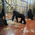 Foto de Budapest Zoo & Botanical Garden