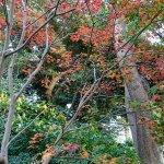 Ueno Park Foto
