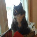 Foto de Cat Cafe Kačių Kavinė