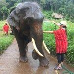 bañando al elefante