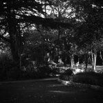Gardens at the entrance (B&W medium format film)