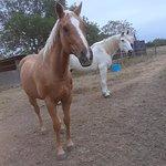 Photo de Horses On The Beach: Corpus Christi