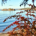 Fall colors with a view of Freeman Island